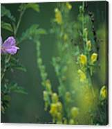 Nootka Rose And Yellow Toadflax Canvas Print