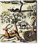 North America: Fauna Canvas Print