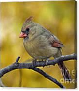 Northern Cardinal Female - D007849-1 Canvas Print
