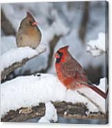 Northern Cardinal Pair 4284 2 Canvas Print