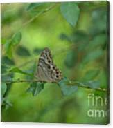 Northern Pearly Eye Butterfly Canvas Print