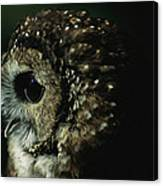 Northern Spotted Owl Strix Occidentalis Canvas Print
