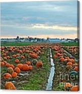 November Pumpkins Canvas Print