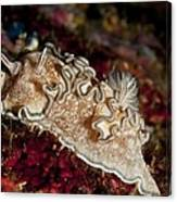 Nudibranch Canvas Print