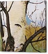 Nuthatch On A Silver Birch 2 Canvas Print