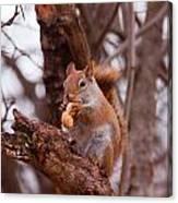 Nutty Squirrel Canvas Print