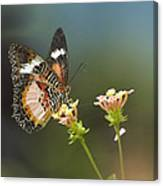 Nymphalid Butterfly Cethosia Luzonica Canvas Print