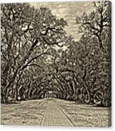 Oak Alley 3 Antique Sepia Canvas Print