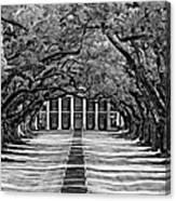 Oak Alley Monochrome Canvas Print