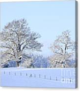Oak In Snow Canvas Print