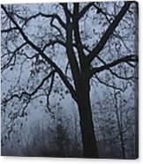 Oak In The Fog Canvas Print