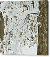 Oak In The Snow Canvas Print