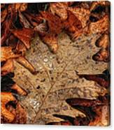 Oak Leaf 1 Canvas Print
