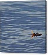 Oak Leaf Floating Canvas Print