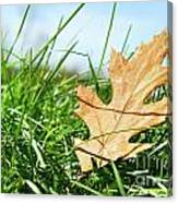 Oak Leaf In The Grass Canvas Print