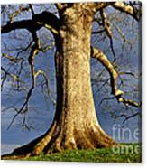 Oak Tree And Storm Clouds Canvas Print