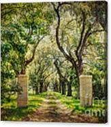 Oak Tree Lined Drive Canvas Print