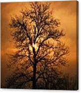 Oak Tree Sunburst Canvas Print