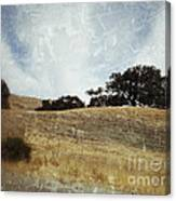 Oak Trees In A California Landscape Canvas Print