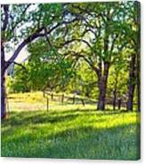 Oak Trees In The Spring Canvas Print