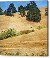 Oaks On Grassy Hill Canvas Print