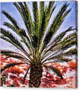Oasis Palms Canvas Print