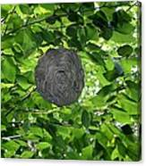 Occupied Bee Hive Canvas Print