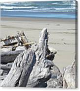 Ocean Beach Driftwood Art Prints Coastal Shore Canvas Print