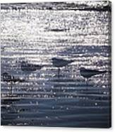 Ocean's Lament Canvas Print