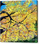 October Fall Foliage Canvas Print