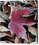 October Frost Canvas Print