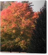 October Sunlight On Tree Tops Canvas Print