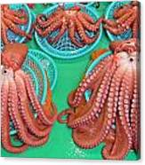 Octopus Attractively Arranged Canvas Print
