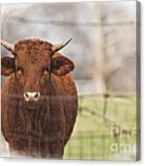 Oh Fence Please Hold Canvas Print