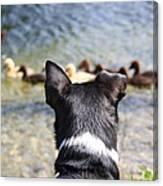 Oh He Wants To Play With Ducks Canvas Print