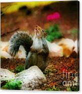 Oh I Ate To Many  Nuts Canvas Print