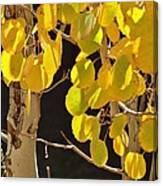 Oh Those Golden Leaves Canvas Print