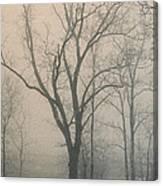 Ohio Winter Solitude Canvas Print