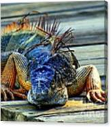Old And Weary Canvas Print
