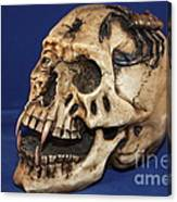 Old Bone's Skull On Blue Cloth Canvas Print