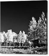Old Cabin In The Aspen Canvas Print