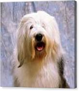 Old English Sheepdog Canvas Print