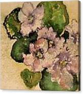 Old-fashioned African Violets Canvas Print