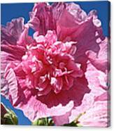 Old Fashioned Hollyhock Canvas Print