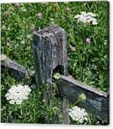 Old Fence And Wildflowers Canvas Print