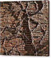 Old Ivy Canvas Print