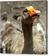 Old Mother Goose Canvas Print
