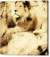 Old Photograph Of A Lion On A Rock Canvas Print