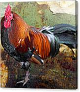 Old Rooster Canvas Print