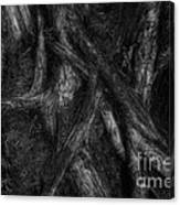 Old Silvery Roots Canvas Print